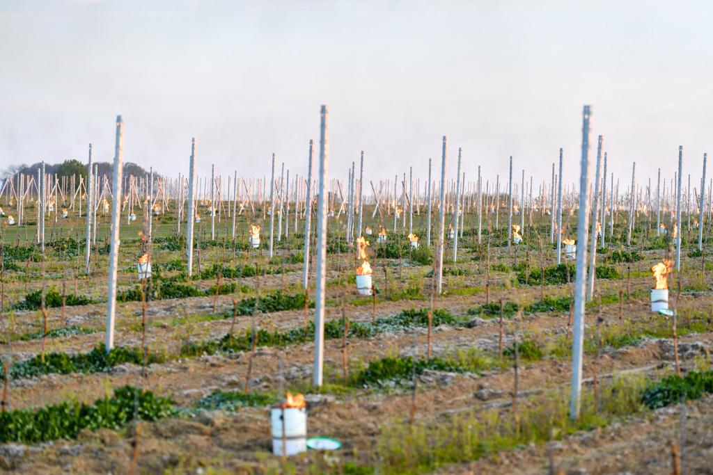 Wijndomein Dappersveld Woestijn